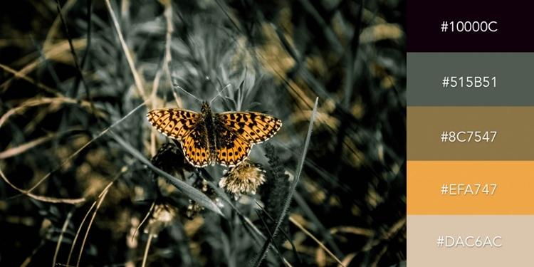 Bộ màu lấy cảm hứng từ hình chú bướm màu cam trên nền đen sẽ tạo một sự tương phản cao cho thiết kế của bạn