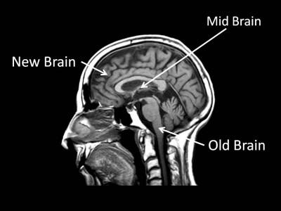 Áp dụng khoa học thần kinh vào việc đặt tên bài thuyết trình như thế nào?